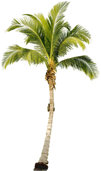 1-tropical-palm-tree-png